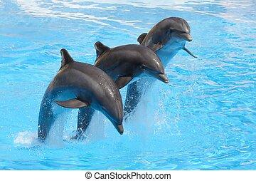 Drei Flaschen Delfine springen