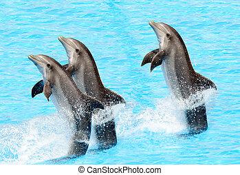 Drei Flaschen Delfine (Trünsiops truncatus)