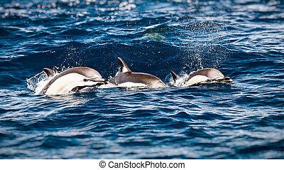 Drei schöne Delfine.
