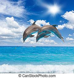 Drei springende Delfine.