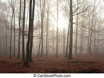Dunkler Wald.