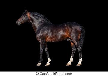 Dunkles Pferd - isoliert auf schwarz.