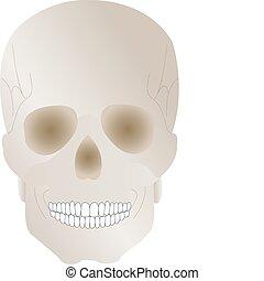 earl, halloween, abbildung, totenschädel, feiertag, vektor, menschliche