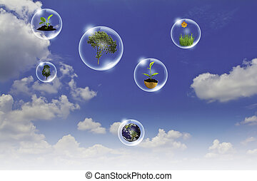 Eco concept : Business Hand Point Baum, Erde Blume in Blasen gegen die Sonne und den blauen Himmel.