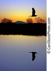 Egret über den Teich