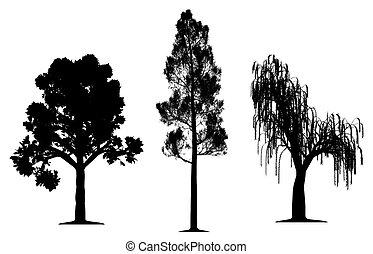 Eiche, Waldzähne und weinender Weidenbaum