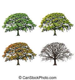Eichenbaum abstrakt vier Jahreszeiten