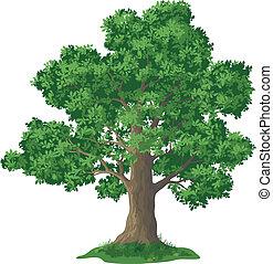 Eichenbaum und grünes Gras