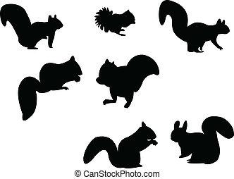 Eichhörnchen-Silhouette