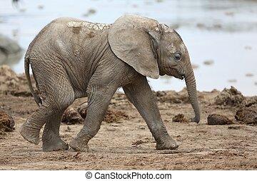 Ein afrikanischer Elefant.