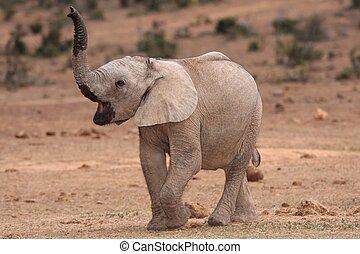 Ein afrikanisches Elefantenbaby