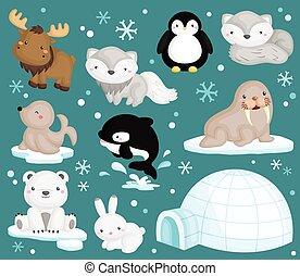Ein arktisches Tiervektorset.