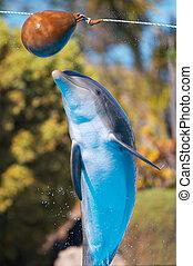 Ein Delfinsprung
