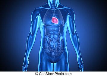 Ein digital blauer Mensch mit ausgeprägtem Herzen