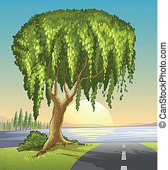 Ein großer Baum auf der Straße