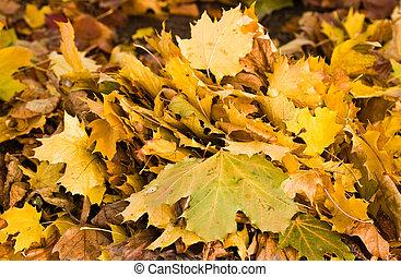 Ein Haufen gelbe Herbstblätter