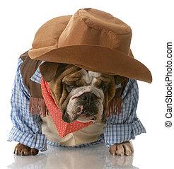 Ein Hund verkleidet sich als Cowboy