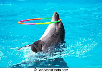 Ein junger Delfin, der im blauen Wasser mit einem Korb spielt.