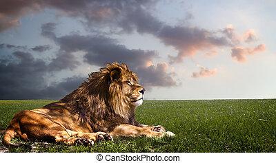 Ein mächtiger Löwe ruht sich bei Sonnenuntergang aus.