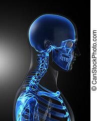 Ein menschlicher medizinischer Scan