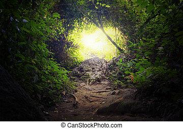 Ein natürlicher Tunnel im tropischen Dschungelwald. Wegbeschreibung