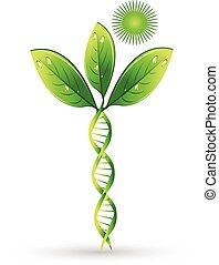 Ein natürliches DNA Pflanzenkonzept