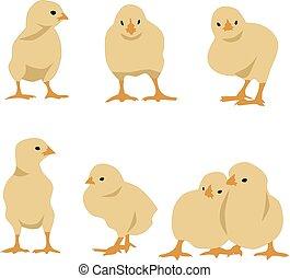 Ein paar Hühner.