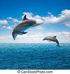 Ein paar springende Delfine.
