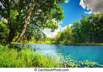 Ein sauberer See im grünen Frühlingswald
