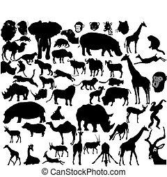 Ein Set tropischer Tiere