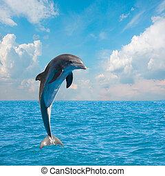 Ein springender Delfin.