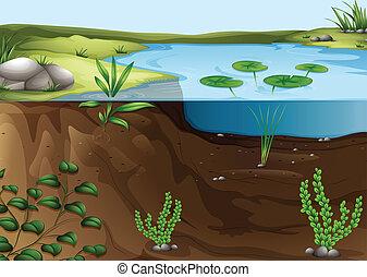 Ein Teichökosystem.