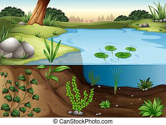 Ein Teich Ökosytem.