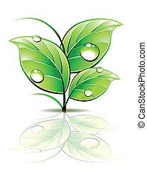Ein Teil von Sprout mit Tau auf grünen Blättern. Vector