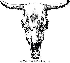 Ein Viehschädel.