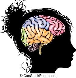 Ein weibliches Gehirnkonzept