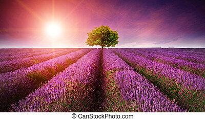 Ein wunderschönes Bild von Lavendelfeld, Sommeruntergangslandschaft mit einem einzigen Baum am Horizont mit Sonnenbrand