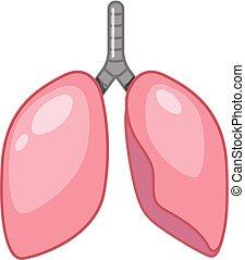 Ein Zeichentrickfilm der menschlichen Lunge.
