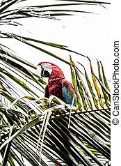 Eine blaue und gelbe Macaw-Verbindung