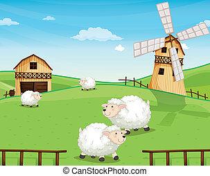 Eine Farm in den Hügeln mit Schafen.