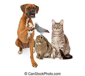 Eine Gruppe dometische Haustiere sitzen zusammen.