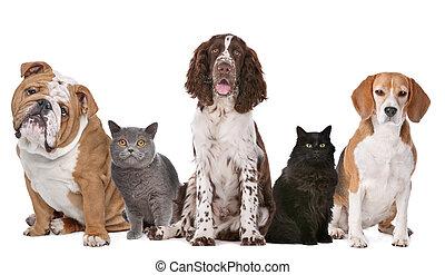 Eine Gruppe Katzen und Hunde