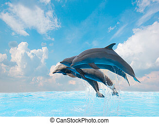 Eine Gruppe springender Delfine.