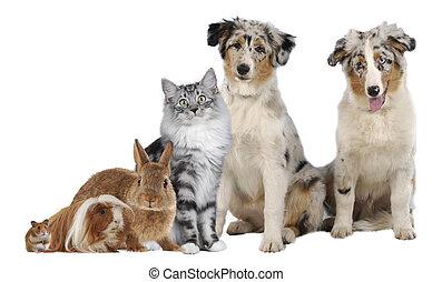 Eine Gruppe verschiedener Haustiere.