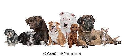 Eine Gruppe von acht Hunden