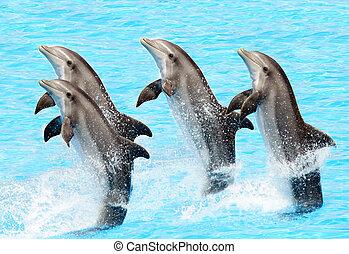 Eine Gruppe von Flaschenfinen (Turisops Truncatus)