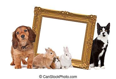 Eine Gruppe von Haustieren, die um einen goldenen Bildrahmen stehen