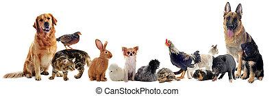 Eine Gruppe von Haustieren