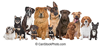 Eine Gruppe von zwölf Hunden
