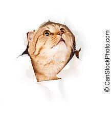 Eine Katze, die in einem abgelegenen Loch aufschaut